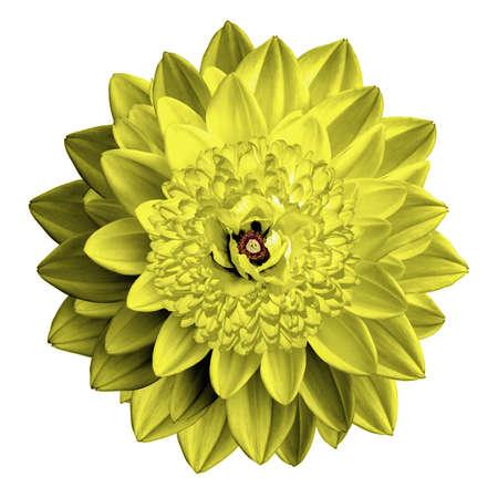 surrealistic: Surrealistic fantasy yellow flower macro isolated on white Stock Photo