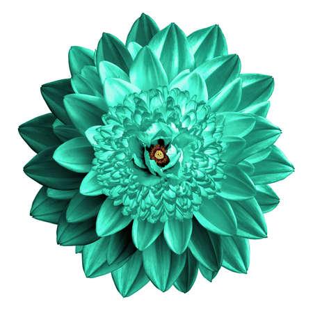 Surrealistic fantasy turquoise flower macro isolated on white