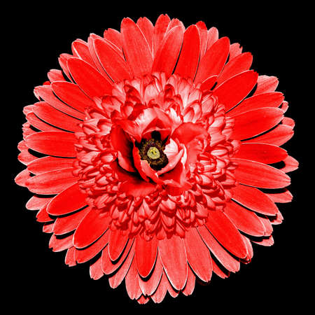 surrealistic: Surrealistic fantasy red flower macro isolated on black