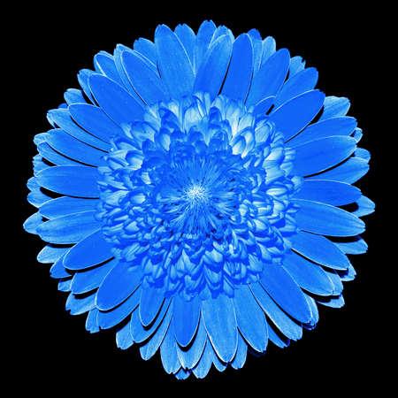 surrealistic: Surrealistic fantasy blue flower macro isolated on black Stock Photo