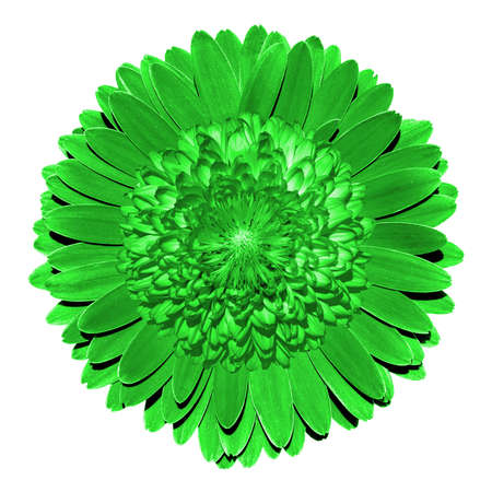 surrealistic: Surrealistic fantasy green flower macro isolated on white