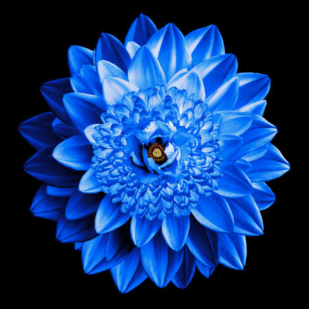 surrealistic: Surrealistic fantasy blue flower macro isolated on black Stock Photo