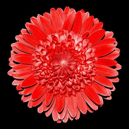 surrealistic: Surrealistic fantasy red flower macro isolated on black
