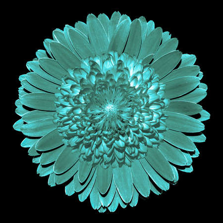 surrealistic: Surrealistic fantasy turquoise flower macro isolated on black