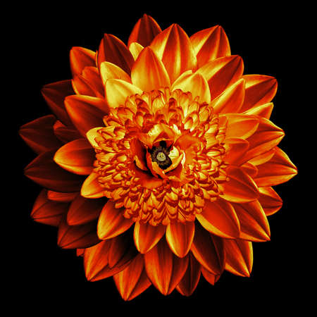 surrealistic: Surrealistic fantasy orange flower macro isolated on black