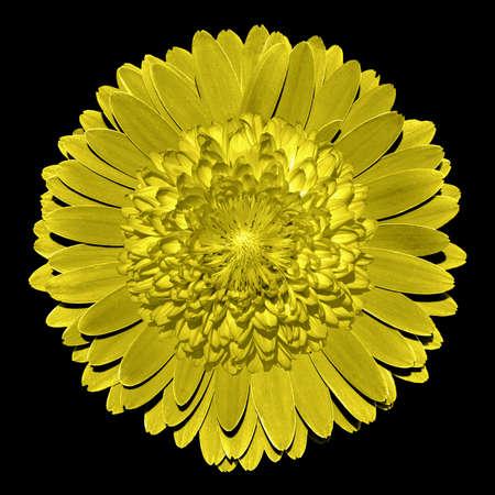 surrealistic: Surrealistic fantasy yellow flower macro isolated on black Stock Photo