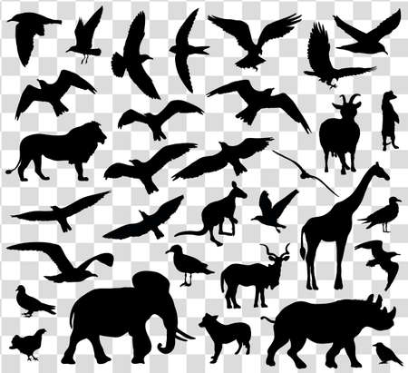 hornbill: Set of animals silhouettes isolated. Vector illustration Illustration
