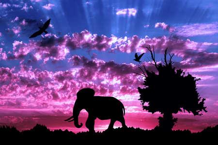 Dschungel mit altem Baum, Vögeln und Elefanten auf purpurrotem bewölktem Sonnenunterganghintergrund