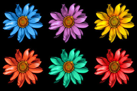surrealistic: Pack of colored surreal decorative sunflowers macro isolated on black
