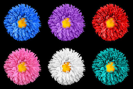 Pack of colored aster flowers with yellow heart macro isolated on white