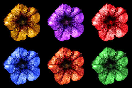 surrealistic: Pack of colored surreal dark chrome Althea flowers macro isolated on black