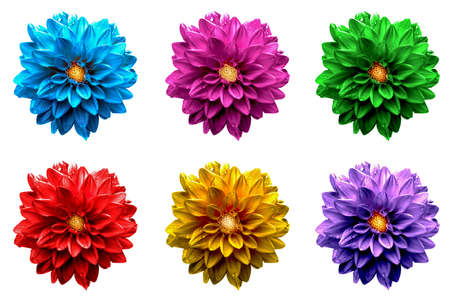 surrealistic: Pack of colored surreal dahlia flowers macro isolated on white Stock Photo