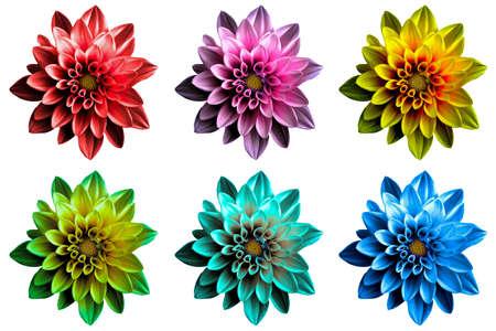 surrealistic: Pack of colored Surreal dark chrome dahila flowers macro isolated on white