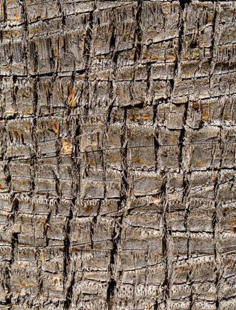 Old tree wooden texture background