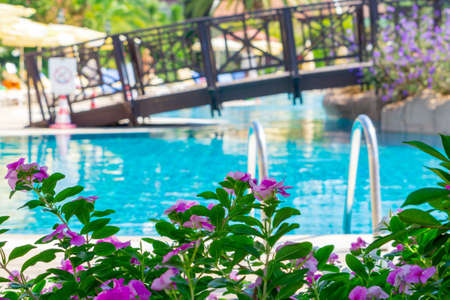 Summer background. Green tree leaves and flowers. Vacation concept. Summer holidays background. Swimming pool. Vivid HDR photo Banco de Imagens