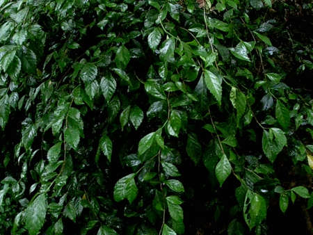 photo of green leaves wet with rain Stock fotó