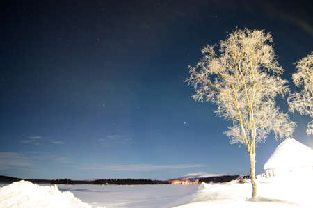 Bright tree and stars during polar night