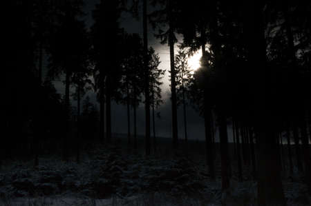 boles: Dark forest with sunbeam breaking through the boles