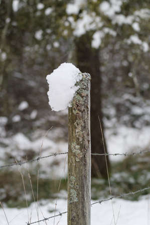 moss and snow covered fence post with barb wire in winter Stock Photo