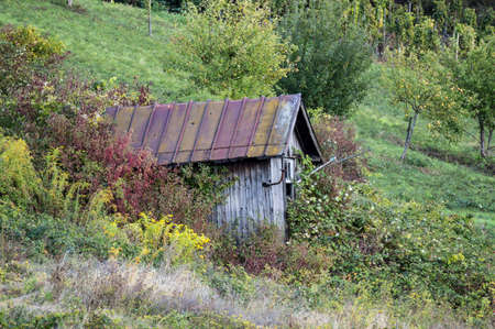 Shack with rusty roof in wildernes