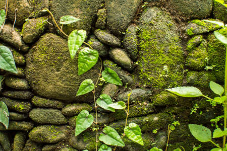 worn structure red: Stone wall with greenery. Texture