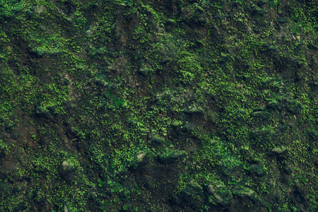 greenery: Nature Texture. Stone wall with greenery