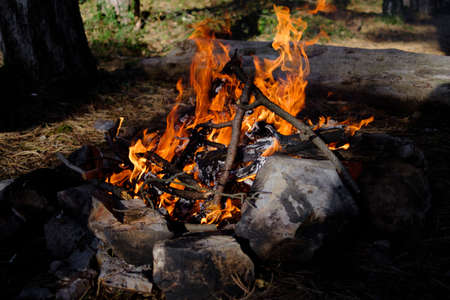 Bonfire in the forest. Family vacation, camping or picnic