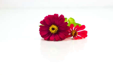 florish: Red flowers Stock Photo