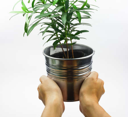 body part: Hand hold pot with small green plant