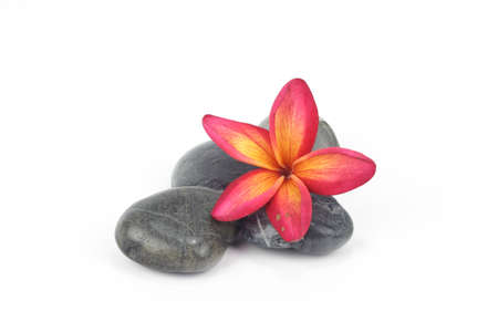 Red frangipani flowers with zen stones photo