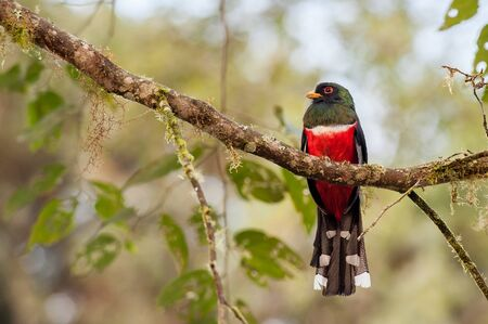 bird watching: Mindo is an excellent spot to do some bird watching. Stock Photo