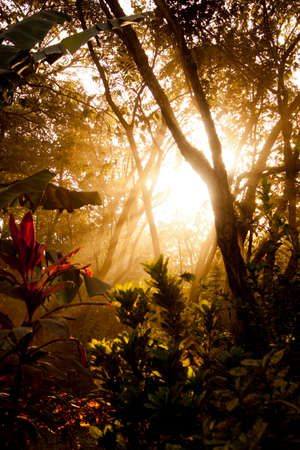 Nice colored sunrise between banana trees and other wild growing plants and trees photo
