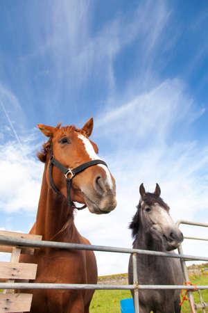 Horses behind fence photo
