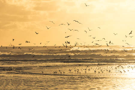 Big group op seagulls take of from the beach at sunset  photo
