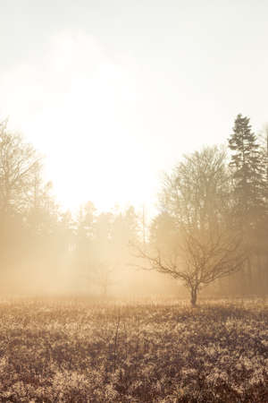 Morning sunshine hits leafless tree standing alone in a field of low vegetation  photo