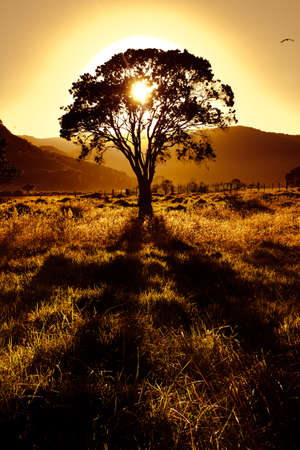Sunset behind tree leaves nice silhouette and shadow in front of grassy, hilly landscape  Фото со стока
