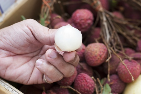 Lychee on hand