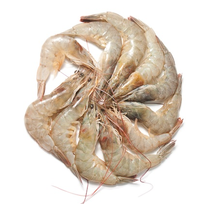aquaculture: Group of shrimp isolated on white background