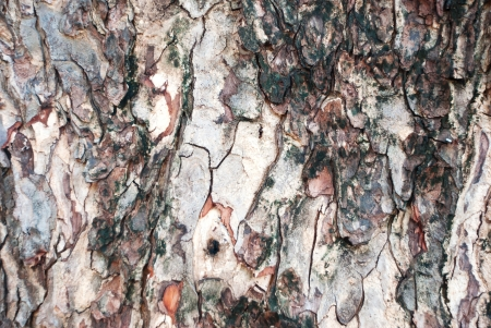 Close-up view of a tree bark texture photo
