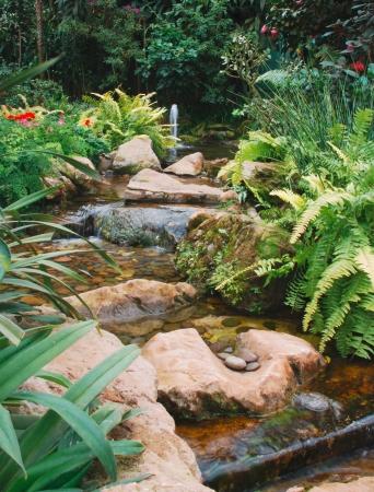 Tropical rainforest garden with waterfall