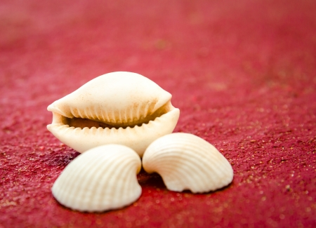 seashells on red floor background photo