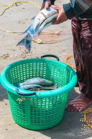 Fishermen collecting their catch fish into basket Stock Photo
