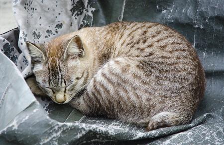 cute kitten sleeping on one side