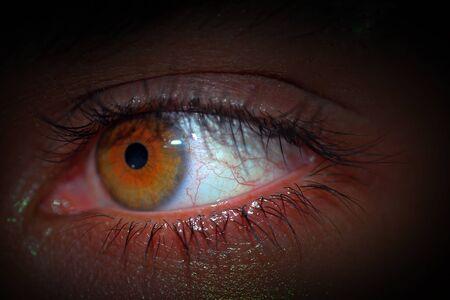 eyes hazel: Eyes Hazel