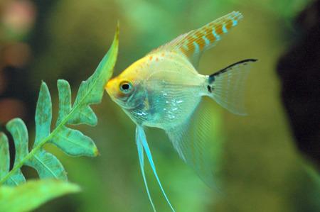 goldy: Fish feeding in Aquarium