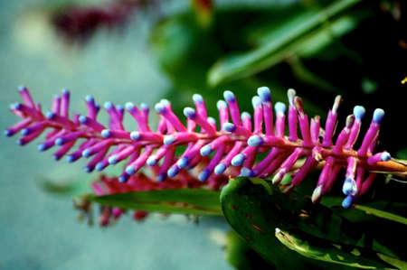 comb: Comb Flower