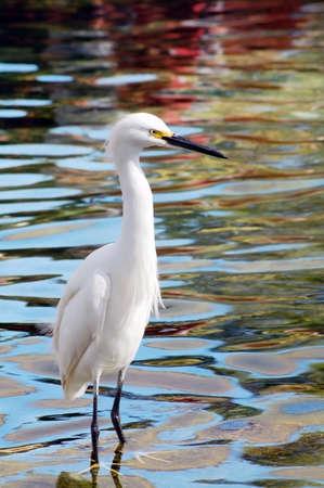 scavenge: Migratory Crane Bird Stock Photo