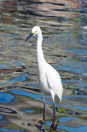 scavenge: Crane Bird closeup