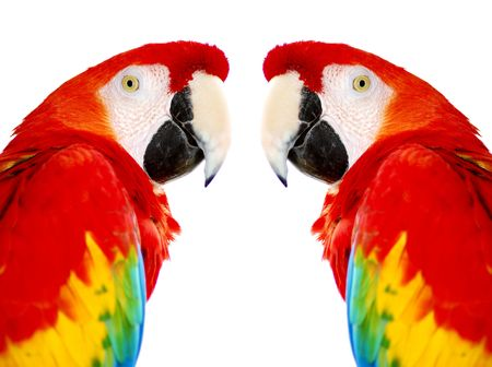 Golden Red Macaw Stock Photo - 2158035