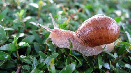 잔디에 달팽이 크롤링
